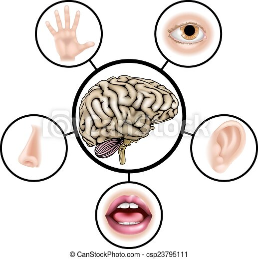 five senses brain a science education illustration of icons rh canstockphoto com five senses clipart black and white five senses clipart images