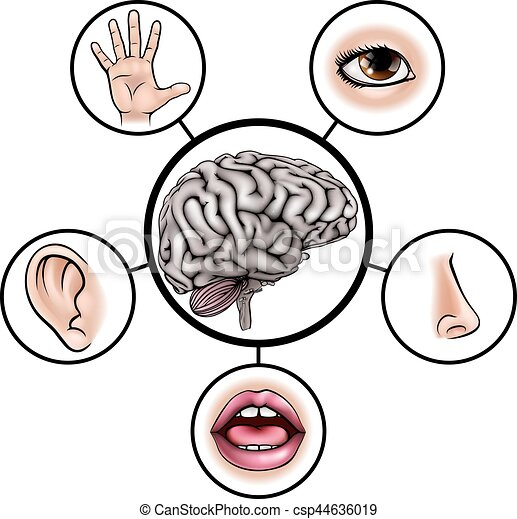 five senses brain a science education illustration of icons rh canstockphoto com 5 sens clipart my 5 senses clipart