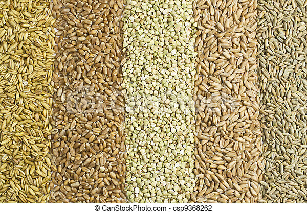 Five sorts of grain - csp9368262