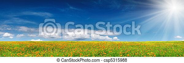 fjäder, blomma - csp5315988