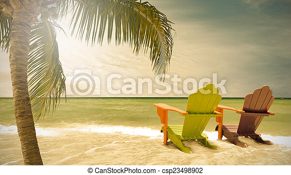 flórida, miami, árvores, lounge, cadeiras, praia palma - csp23498902