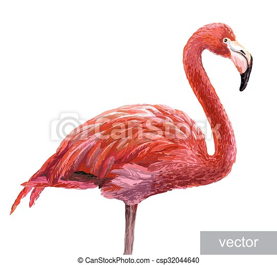 Flamant Rose Colore Rose Bleu Colore Flamingo Realiste