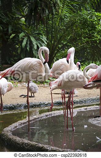 Pájaros flamencos - csp22392618
