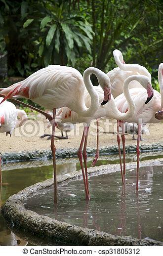 Pájaros flamencos - csp31805312