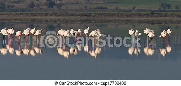 flamingó, madarak - csp17702402
