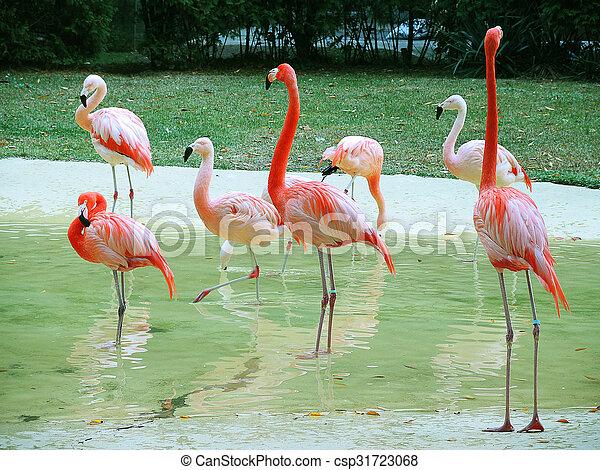 flamingó, madarak - csp31723068