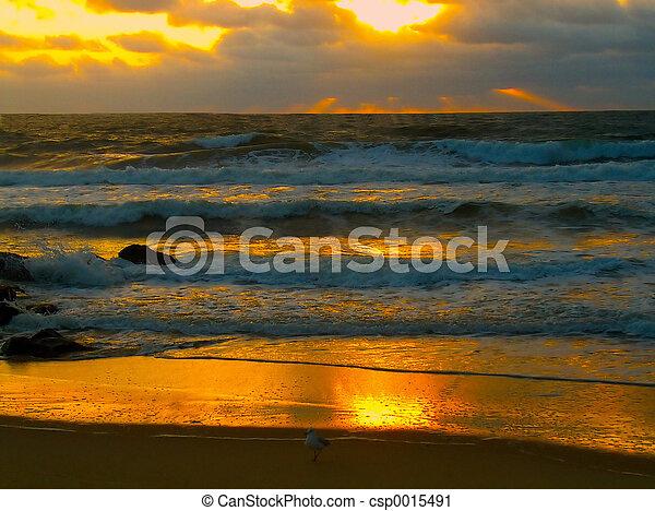 Flaming Sunrise Ray - csp0015491