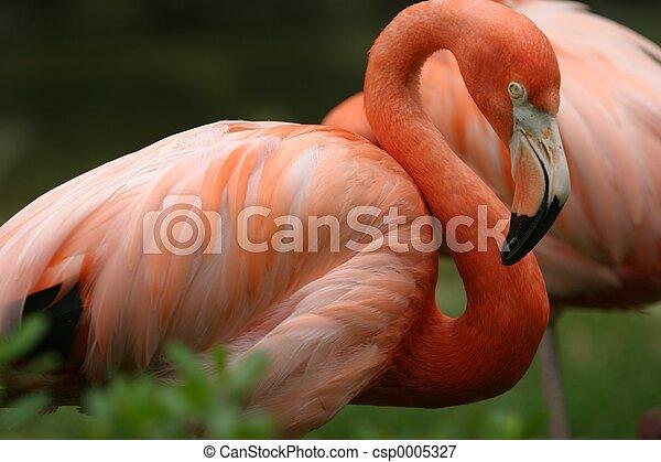 Flamingo 2 - csp0005327