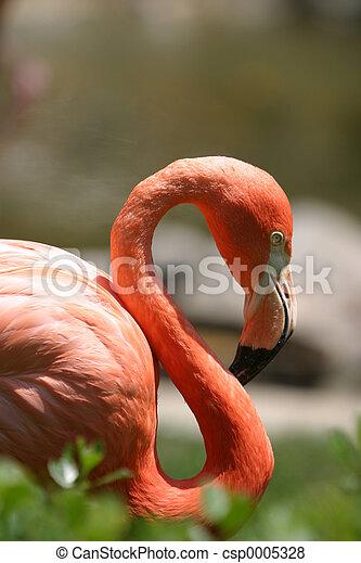 Flamingo 3 - csp0005328