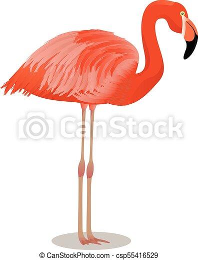 flamingo americano caricatura pássaro flamingo ilustração