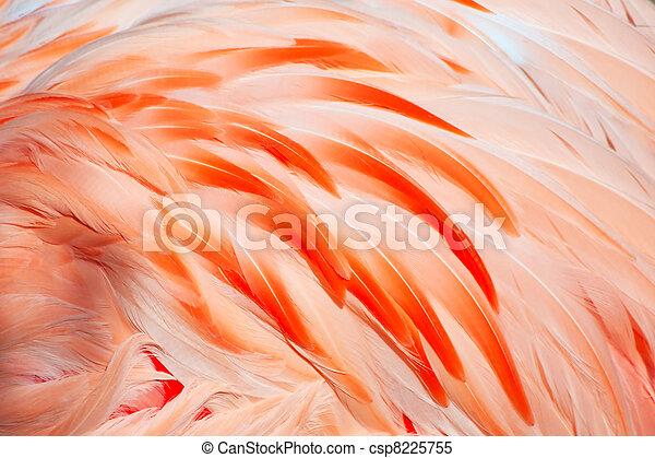 flamingo feathers - csp8225755