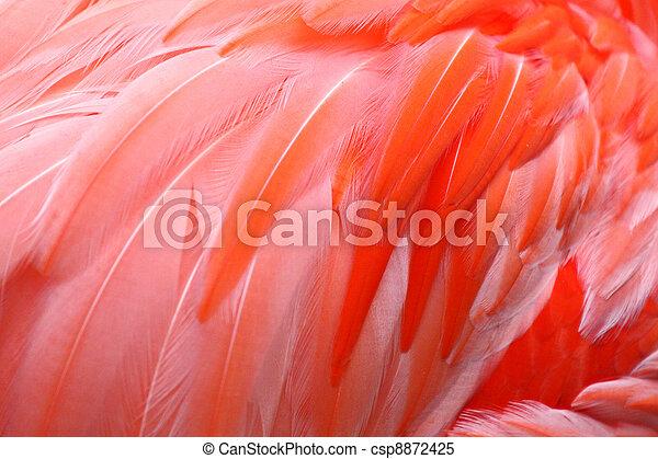Flamingo Feathers - csp8872425