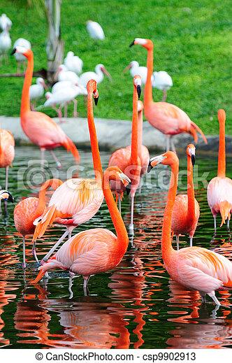 Flamingo in Miami zoo - csp9902913