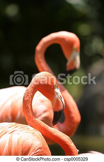 Flamingo pair - csp0005329