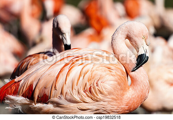 Flamingos Photo - csp19832518