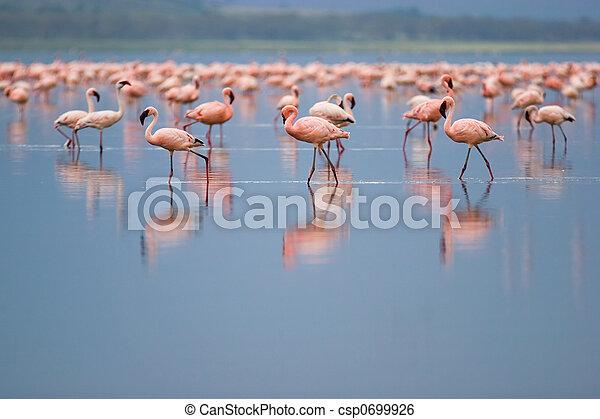 Flamingos - csp0699926