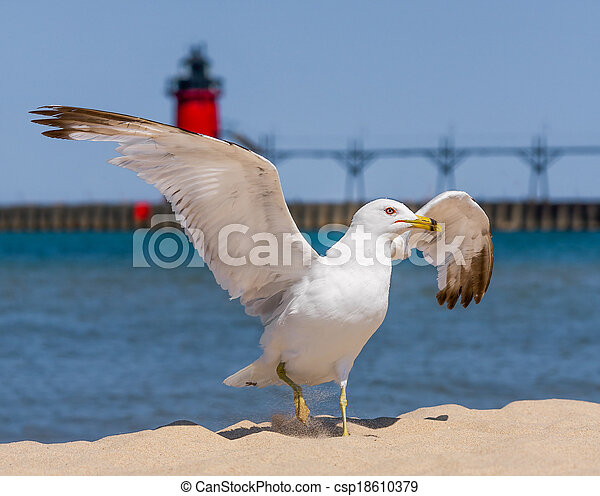 Flapping Gull and LIghthouse - csp18610379