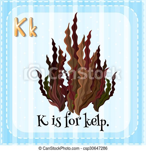 Flashcard letter K is for kelp - csp30647286