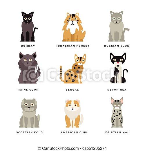 Flat domestic breeds of cats - csp51205274