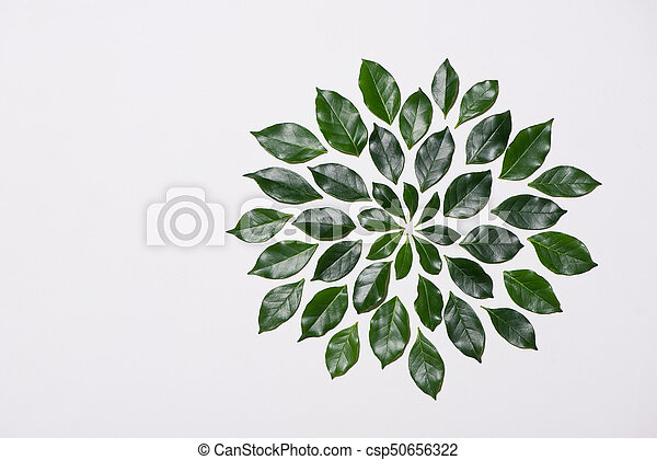 Flat lay of green leaves pattern on white background - csp50656322