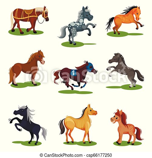Flat vector set of horses in various poses. Hoofed animals isolated. Mammal creatures on green grass - csp66177250