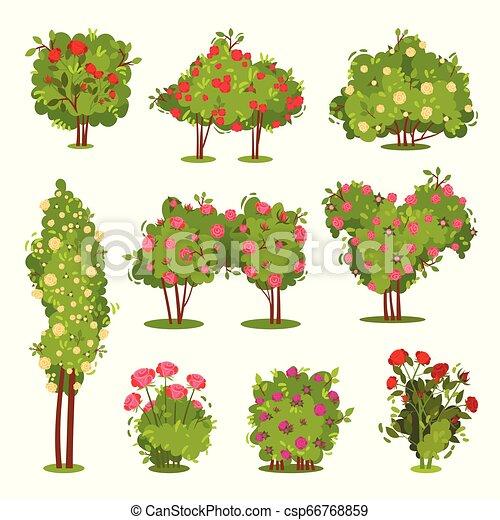 Flat Vector Set Of Roses Bushes Flowering Garden Plants Green