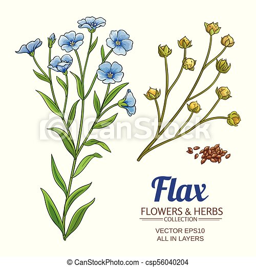 flax vector set flax plant vector set on white background