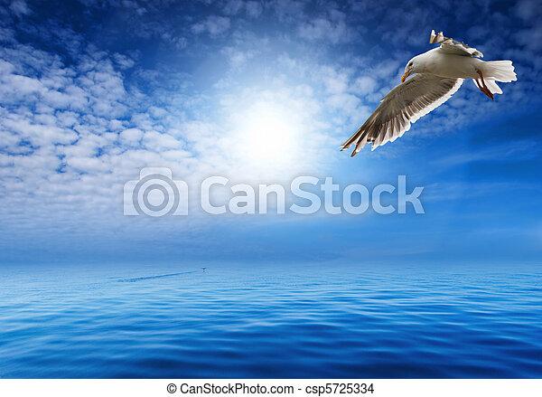flaying seagull - csp5725334