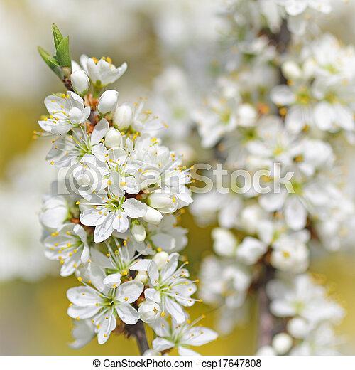 fleur, arbre, pomme, printemps, branche - csp17647808