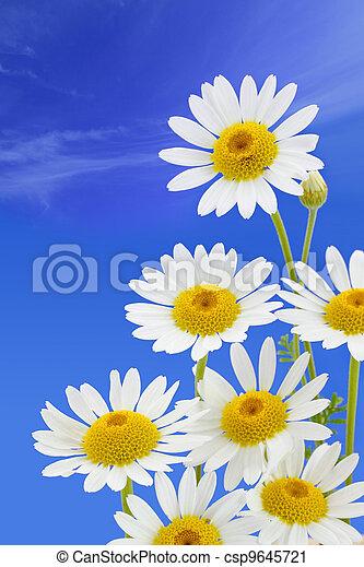 fleur bleue, ciel, contre, pâquerette - csp9645721