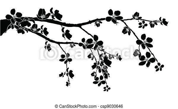 fleur, branche, cerise, beau - csp9030646