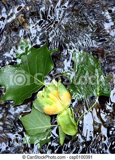 fleur, capturé - csp0100391