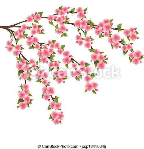 Fleur Cerise Sur Japonaise Arbre Sakura Blanc Fleur
