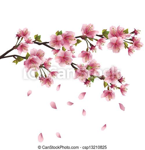 Fleur cerisier sakura japonaise rose arbre p tales - Branche de cerisier japonais ...