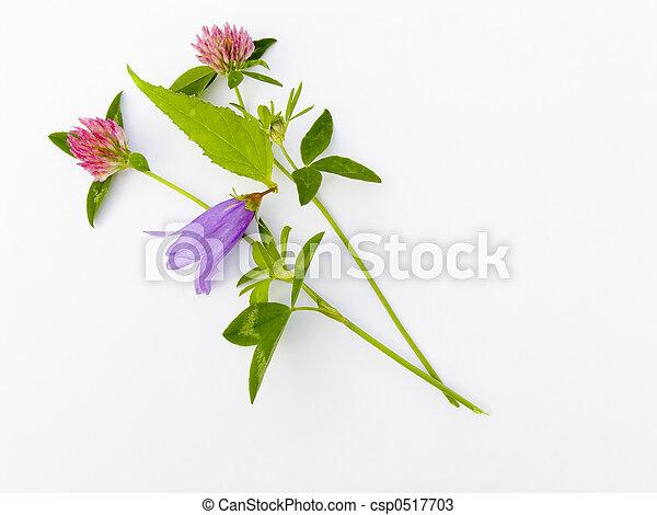 fleur, composition - csp0517703
