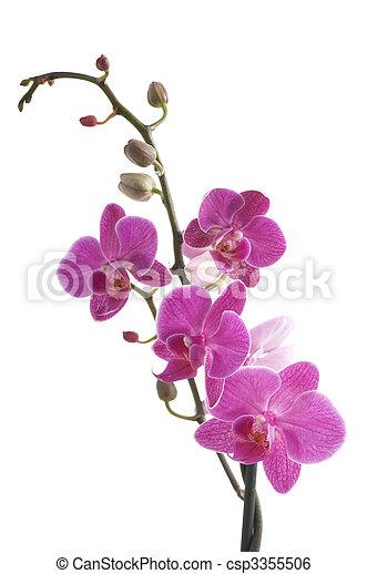 fleur, fond, (phalaenopsis), branche, blanc, orchidée - csp3355506