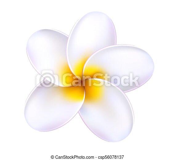 Fleur Frangipanier Exotique Vecteur Plumeria 3d Exotique Ete