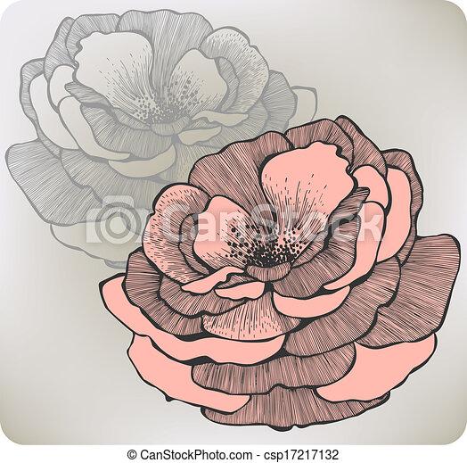 fleur, illustration., rose, vecteur, sauvage, hand-drawing. - csp17217132