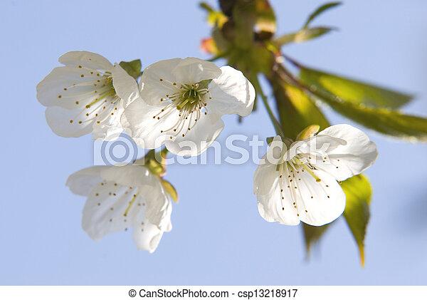 fleur - csp13218917