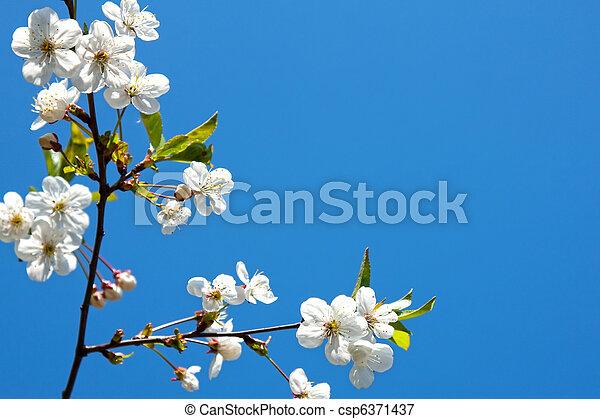fleur - csp6371437
