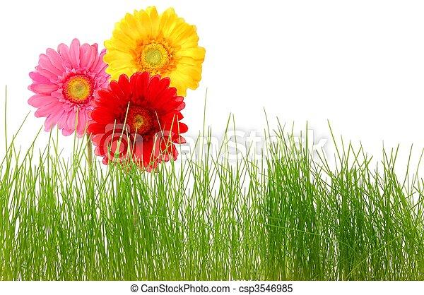 fleur - csp3546985