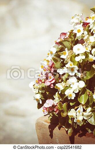 fleur - csp22541682