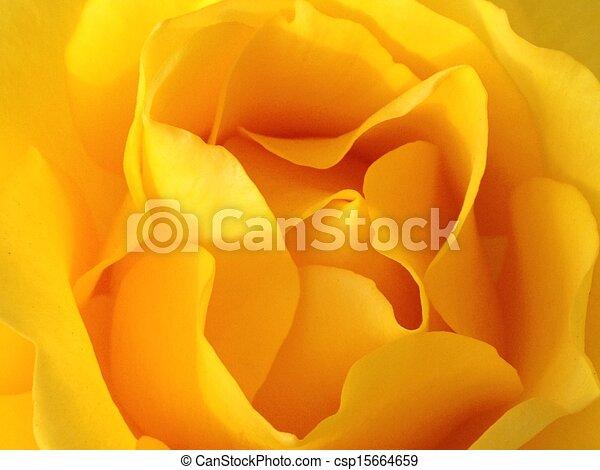 fleur, jaune - csp15664659