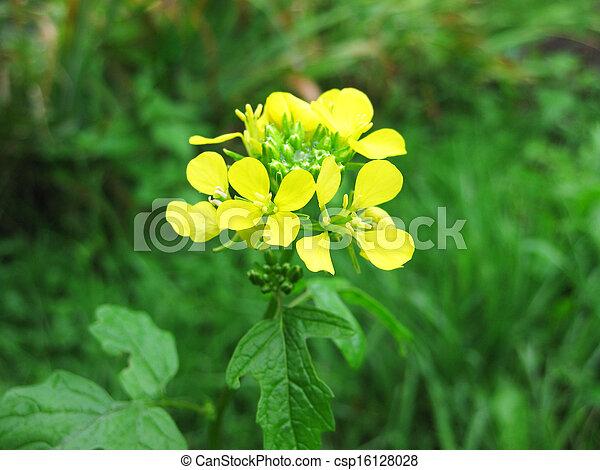 fleur jaune sarrasin fleur vert jaune fond sarrasin herbe. Black Bedroom Furniture Sets. Home Design Ideas