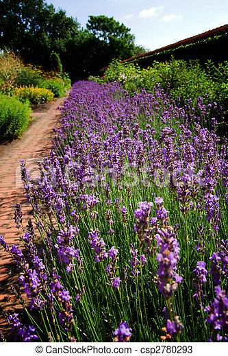 fleur lavande lit jardin plante jardin fleur pourpre photos de stock rechercher des. Black Bedroom Furniture Sets. Home Design Ideas