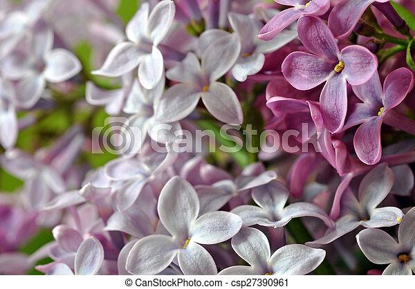 Fleur Lilas Fond