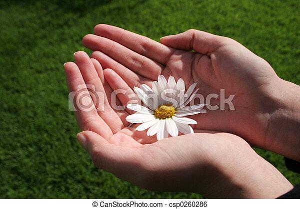 Fleur Main Fond Mains Vert Femenine Tenue Paquerette Blanc