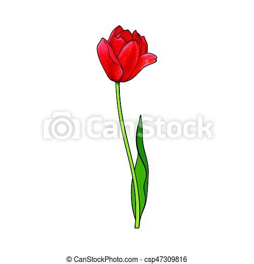 Fleur Main Tulipe Dessiné Côté Rouges Vue Croquis Fleur