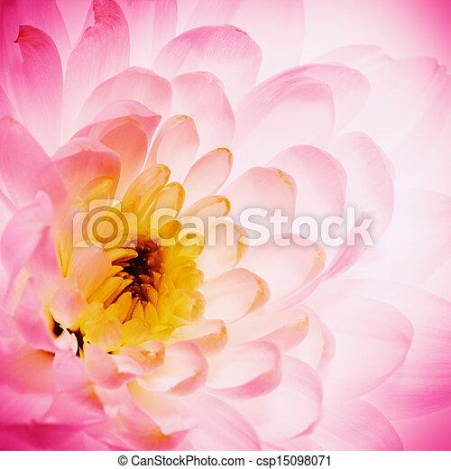 fleur, naturel, lotus, résumé, arrière-plans, pétales - csp15098071