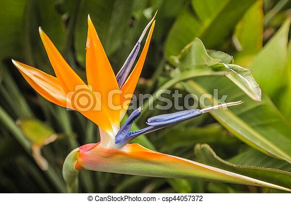 Fleur Oiseau Paradis Jardin Fleur Paradis Tropical Botanique